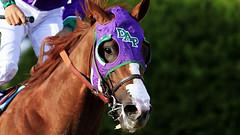 AFP-Getty_492289303 (bettina_147) Tags: md bestof unitedstates file baltimore horseracing topics topix toppics toppix