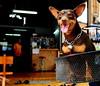 ,, Tinker Bell ,, (Jon in Thailand) Tags: street dog smile nikon basket streetphotography tinkerbell nikkor k9 d300 175528 thelittledoglaughed