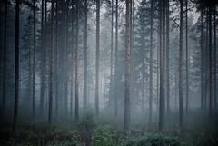 (Sameli) Tags: trees summer nature fog night forest suomi finland ylihärmä