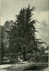 Anglų lietuvių žodynas. Žodis ligneous plant reiškia sumedėjusių augalų lietuviškai.