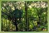 Silent Valley---------------40 (Binoy Marickal) Tags: india green tourism nature water rain kerala mala palakkad evergreenforest treaking silentvalleynationalpark nilgirihills mannarkkad mukkali kuzhur indiabinoymarickal