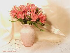 Astromelia in Pink (Grace Pedulla Dillon) Tags: flowers summer stilllife garden bouquet botanics astromelia