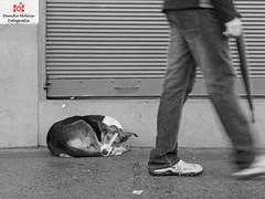 Invisible (pan90xo) Tags: dog blancoynegro perro perros abandonado callejero adopta