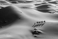 [Explored] (Jano Silva DC) Tags: africa trip travel sunset shadow blackandwhite bw orange tourism sahara monochrome sand shadows desert dunes dune camel morocco guide caravan camels ergchebbi