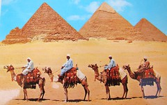 """Among My Souvenirs - Cairo Egypt - Giza Pyramids / Camels / """"Held Hostage"""" at Gift Shop (ramalama_22) Tags: sahara shop sand desert post taxi egypt picture recuerdo souvenir camel card gift pyramids development purchase giza quota"""