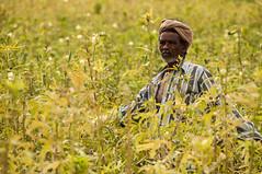 Farmer in the Field (leif.gunnar.boman) Tags: india man green nikon farm indian farming crop crops local farmer dslr okra tamil tamilnadu nadu nikond90 leifboman gunnarboman leifgunnarboman