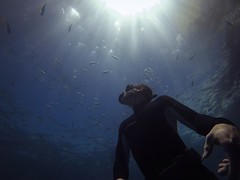 Freediving (blake.vanzanden) Tags: ocean sea uw coral underwater go great free australia scuba diving freediving pro barrier cairns reef apnea townsville gopro