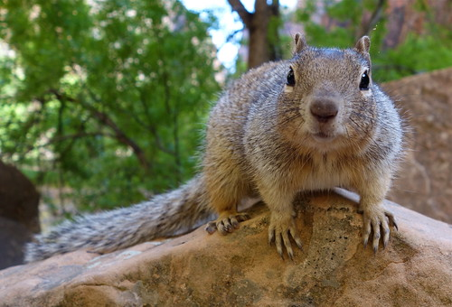 Squirrel! by jurvetson, on Flickr