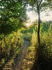P1070540 (2) (leafy) Tags: urban stream pittsburgh restoration recovery frickpark ninemilerun wetland ecosystem