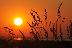 Geddal sunset (Jaedde & Sis) Tags: sunset orange grasses gamewinner 15challengeswinner challengegamewinner fotocompetition fotobronze gamex2 storybookwinner gamex3