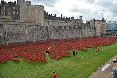 Fields of Red Outside the Tower of London (CoasterMadMatt) Tags: world city uk greatbritain red summer england sculpture building london tower castle art english castles architecture tom season ceramic paul photography 1 blood nikon memorial war photos unitedkingdom britain anniversary united capital great landmarks kingdom dry august landmark structure photographs poppy poppies gb 100th borough british ww1 piper lands swept moat greatwar cummins toweroflondon seas worldwar1 hamlets 2014 nikond3200 towerhamlets capitalcity thegreatwar drymoat tompiper d3200 100thanniversary londonboroughoftowerhamlets paulcummins coastermadmatt august2014 coastermadmattphotography bloodsweptlandsandseasofred ceramicpoppies