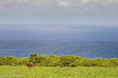 Kohalo Coast (timjgo) Tags: vacation hawaii bigisland