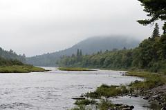 Southwest Miramichi River (Boganeer) Tags: canada green nature forest canon river landscape salmon newbrunswick maritime nouveaubrunswick flyfishing forêt maritimes clearwater miramichi atlanticcanada atlanticsalmon miramichiriver canonxti acadianforest