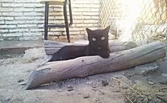 Pirata 47 (Asociacin Defensa Felina de Sevilla) Tags: espaa sevilla gatos felinos animales gatitos adoptar protectora adopciones apadrinar gatosurbanos defensafelina asociacindeanimales coloniasdegatos proteccindegatos activismoporlosanimales