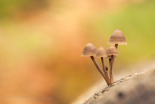Fungi friday