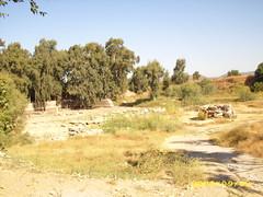 IMG_3443 (romir59) Tags: efes artemisa turcia zeita templu
