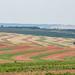 Região de muita agricultura e pecuária