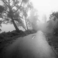 Bromo, Indonesia (pas le matin) Tags: blackandwhite bw nb noiretblanc monochrome road square route winding trees arbres fog mist brouillard brume bromo indonesia asia indonsie asie southeastasia travel voyage lanscape paysage world canon 7d canon7d canoneos7d