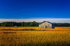 Two Old Barns On An Autumn Field (k009034) Tags: 500px wooden copy space finland matkaniva oulainen outdoors tranquil scene agriculture architecture autumn barn building clouds countryside crops fields forest morning nature no people old rural sky wheat teamcanon
