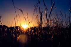 The Promise of a Tomorrow (miss.interpretations) Tags: sunset sun colorado prairie canonm3 castlerock fields goldenhour gold