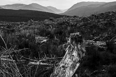 Bones of our Fathers - Glenkin Oct 2016 (GOR44Photographic@Gmail.com) Tags: glenkin mono bw scotland mountains monoscotland gor44 trees argyll bute cowal fujifilm xpro1 xf35mmf14 35mmf14