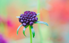 coloration naturelle (christophe.laigle) Tags: naturelle macro xf60mm fuji couleurs fleur xpro2 flower christophelaigle ngc