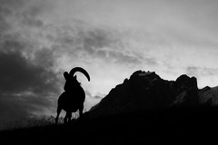 IMG_6293 (Gutenman) Tags: besengi outdoor alpinism alpinist animals tourist