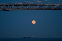 Super moon, plate 2 (Michael Dunn~!) Tags: baybridge boats bridge embarcadero goldenhour moon photowalking photowalking20120505 photowalkingsolo sailboat sanfrancisco sky supermoon suspensionbridge water