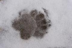Tetons Wknd (pearsonchristine28) Tags: tetons rocky mountains snow fall bison bear waterfall hiking wyoming idaho