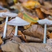 """2016_10_31_Champignons-33 • <a style=""""font-size:0.8em;"""" href=""""http://www.flickr.com/photos/100070713@N08/30394056480/"""" target=""""_blank"""">View on Flickr</a>"""