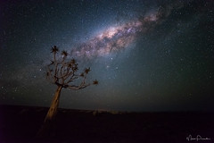 Namibian Sky I (Maico Presente) Tags: namibia milkyway night sky tree travel africa fishrivercanyon light pollution