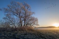 Cold Start (jan.scho) Tags: wetterau hessen au auenlandschaft feld wiese reif rauhreif kalt morgen sonnenstrahlen sonne heiter nebel morgennebel sonnenaufgang winter vgel zugvgel formation wildgnse