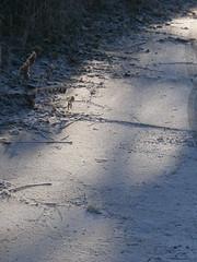 Erster Schnee 6 (Thorte Berlin) Tags: ersterschnee schnee bume baum pflanze pflanzen berlin berlinzehlendorf zehlendorf steglitzzehlendorf frost deutschland germany firstsnow tree trees plant