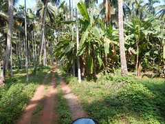 Villages Near Calicut Kerala Photography By CHINMAYA M (58)