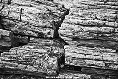 Petrified Forest Black and White Photography  Leopoldo Rivera Films Fall 2016 (LeoRiveraMedia) Tags: bw blackandwhite california calistoga fall2016 fineart forest halloween leopoldo leopoldorivera nature petrifiedforest photography portfolio rivera sonomacounty streetphotography contrast emotions enchanted explore magical wwwleopoldoriveracom wwwleopoldoriverafilmscom