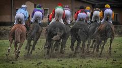 power (ddimblickwinkel) Tags: horse racing nikon tamron pferd sport reiten dresden sachsen animal speed art d300 d300s outdoor tier