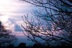 IMG_0871.jpg WM (MetallicNuance) Tags: nature ethereal country kent sky trees woodland