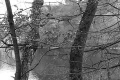 arbres (fotoleder) Tags: nb monochrome bw noiretblanc fotoleder ville plantes feuilles nature arbres eau fleuve automne végétaux extérieur genève ge suisse ch