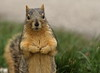 Squirrel, Morton Arboretum. 379 (EOS) (Mega-Magpie) Tags: canon eos 60d nature wildlife cute squirrel the morton arboretum lisle dupage il illinois usa america green grass