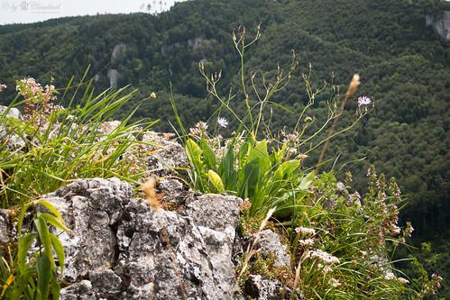 Plants on a rock