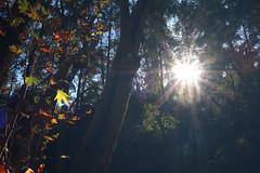 Troodos Geopark (30) (Polis Poliviou) Tags: polispoliviou polis poliviou   cyprus cyprustheallyearroundisland cyprusinyourheart yearroundisland zypern republicofcyprus  cipro  chypre   chipir chipre  kipras ciprus cypr  cypern kypr  sayprus kypros polispoliviou2016 troodosgeopark troodos mediterranean nicosia valley life nature forest historical park trekking hiking winter walking pine pines prodromos limassol paphos fall autumn geopark kakopetria