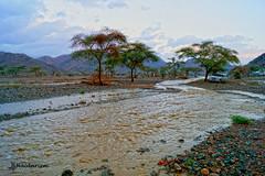 Rain at Last (haidarism (Ahmed Alhaidari)) Tags: nature ngc outdoor rain runningwater water tree cloud sky bluesky sonya65 depthoffiled stones mountain