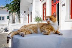 Cat (Kevin R Thornton) Tags: d90 nikon travel street mediterranean greece mykonos cat animal mikonos egeo gr