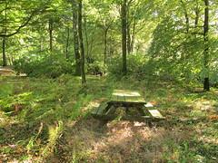 A Picnic Area (Adrian Midgley) Tags: haldon belvedere sun sooc