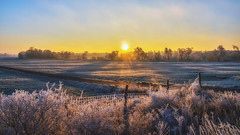 frozen morning (bocero1977) Tags: landscape winter nature germany meadow weather sun clouds sunset trees blue fence road light outdoor ice white trail colors cold frost sky wide frozen