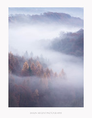 Inversion (shaun.argent) Tags: woodland woods winter morning mist misty trees tree landscapes shaunargent seasons nature inversion riverure hackfall