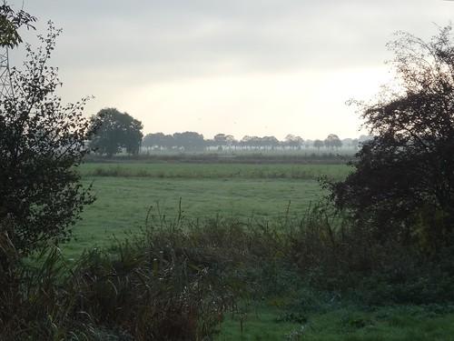 Landscape near Leer