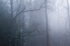 Alone in the mist (Petr Sýkora) Tags: les mlha mood nature forest outdoor fog mist trees branches dark atmosphere