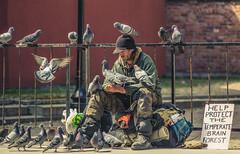 Pigeon Man // Brain Forest (Matt Henry photos) Tags: street 3 ontario canada delete10 delete9 delete5 delete2 forrest delete6 delete7 pigeons ottawa homeless capital bank delete8 delete3 brain delete delete4 save save2 save4 save5 save6 centretown ottcity myottawa