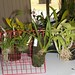 Assorted plants for the auction